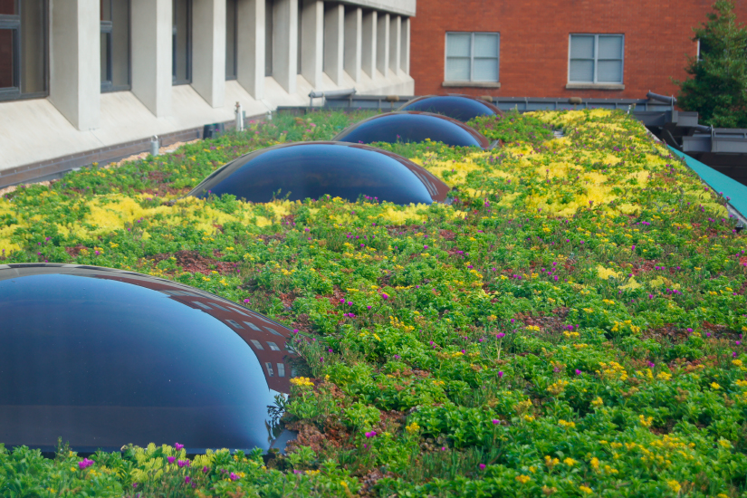 greenroof-piedmont-hospital