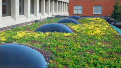 Green Roof Modular System Florida